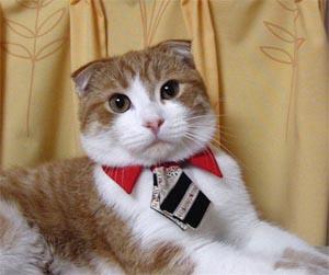 [cat_in_necktie.jpg]