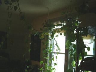 [crazybigplant.jpg]