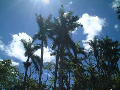 cuba_palm_trees.jpg