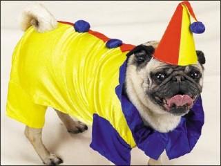 [dog_clown.jpg]