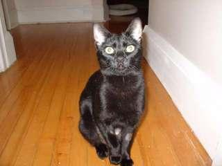 new_cat_007.jpg