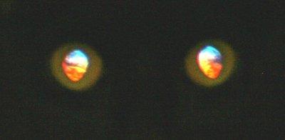 scary_cat_eyes.jpg