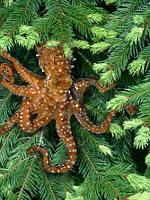 [Tree Octopus]